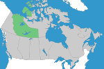 Piping – North West Territories